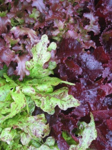 Salad Mix 2